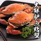 野生大鮮肥三點蟹 *1隻組( 200g-300g/隻 )