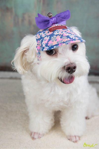 狗狗花花遮陽遮風沙帽 (適用頸圍25 ~ 27公分的狗狗/S號) 帽頂有縫合的施華洛世奇元素   ~ OHMYDOG! ~