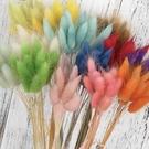 永生花花材~彩色兔尾草,每份3支
