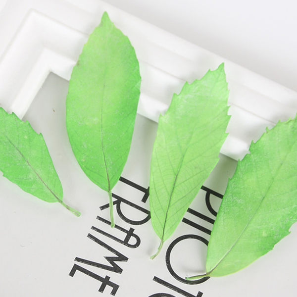 永生花花材,永生橡栗葉,禮盒玻璃罩製作材料,一片