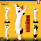 全套5款【日本正版】動物愛好系列 貓地藏...