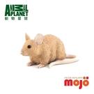 《MOJO FUN動物模型》動物星球頻道獨家授權-老鼠