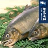 【阿家海鮮】嚴選宜蘭帶卵母香魚特規 610g±10%/包(3尾入) 新鮮 爆卵 母香魚 鹽烤 台灣純淨水域