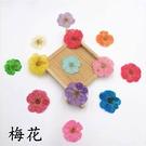 梅花壓花,一份12朵