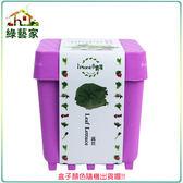 【綠藝家】iPlant小農場系列-萵苣