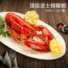 【屏聚美食】加拿大直送 頂級波士頓龍蝦1隻(約500g/隻) - 任選