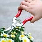 花剪園藝剪刀碳鋼花果剪花藝修枝剪