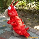寵物變身龍蝦螃蟹貓咪衣狗狗衣服新年寵物喜慶大型犬【小獅子】