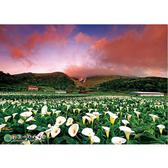 【P2 拼圖】風景系列 陽明山國家公園-海芋盛開 (520片) HPY0520-001