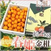 【果之蔬-全省免運】日本鹿兒島春姬金桔2L(2kg±10%)