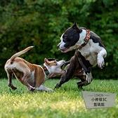 狗狗用品寵物項圈脖圈鈴鐺金毛拉布拉多狗項圈【小檸檬3C】