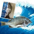 (3包)台西聚鮮-黑鯛(黑格)300g-400g含運組