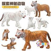 老虎白虎動物仿真模型套裝實心塑料靜態野生生物玩具模型禮盒裝