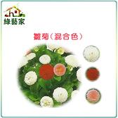 【綠藝家】大包裝H15.雛菊(混合色,高15~20cm)種子1.5克(約2100顆)