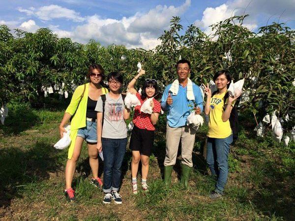 [台南]採果體驗-小崇ㄉ果園〔5-7月芒果〕
