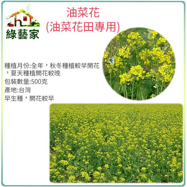 【綠藝家】油菜花種子(油菜花田專用)500克