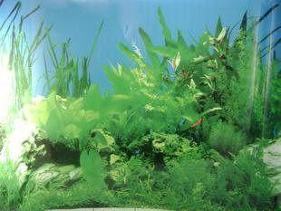 水族箱裝飾背景畫 魚缸裝飾造景用 寬度50cm