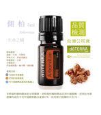 側柏精油 Arborvitae 5ml doTERRA 美商多特瑞精油 (免運)