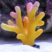 一佳寵物館 仿真珊瑚海膽海葵水中布景魚缸裝飾水族箱造景海水缸造景水族造景