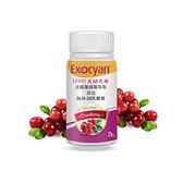 【UGND】美婦思康蔓越莓乳酸菌膠囊 75顆/瓶 (升級版)