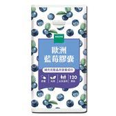【薇達WEDAR】歐洲藍莓膠囊(120顆/瓶)