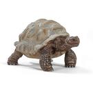 Schleich 史萊奇動物模型 象龜_ SH14824