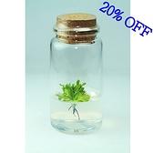 植物盒子 捕蠅草瓶栽 食蟲植物 基本款 8折促銷