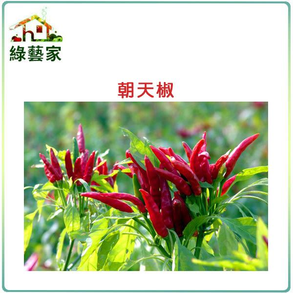 【綠藝家】G29.朝天椒(瑞興)種子15顆