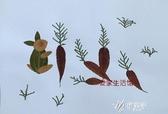 幼兒園手工課粘貼畫活動真樹葉標本DIY材料包兒童益智手工貼畫 伊芙莎