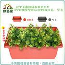 【綠藝家】我家菜園種植專用盆大型(PP耐...