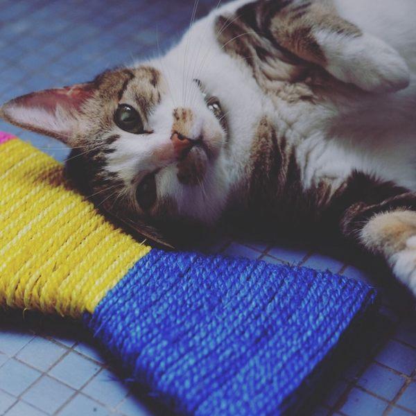 貓抓板劍麻貓爪板彩色魚形貓捉板貓磨爪器貓玩具貓咪用品沙發