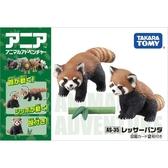 動物模型 小熊貓浣熊安利亞動物模型兒童仿真認知男玩具貓熊119494