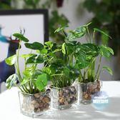仿真盆栽 北歐仿真植物假綠蘿小盆栽室內裝飾多肉綠植辦公桌面擺件家居裝扮