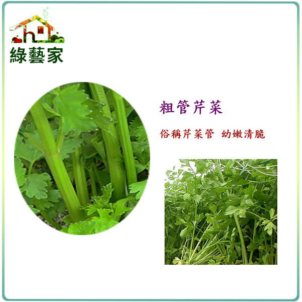 【綠藝家】大包裝F13.抽管芹菜種子80克(芹菜管,粗管抽苔青芹)