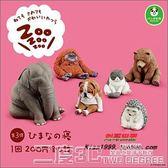 扭蛋 日版 熊貓之穴 休眠動物園 三彈 貓 大象 紅毛猩猩 扭蛋 二度3C