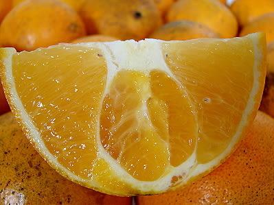 10月再也吃不到的 肚臍橙★花蓮鶴岡無毒農業 7斤