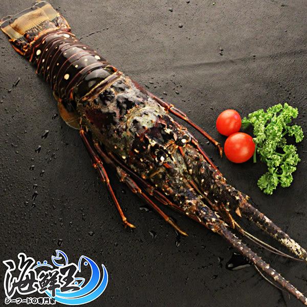巴西大龍蝦 *1隻組( 450±10%/隻 )