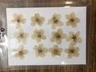 李花,壓花押花材料滴膠,一包12朵
