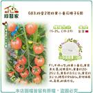 【綠藝家】G83.粉愛2號粉果小番茄種子...