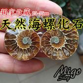【天然海螺化石 獨家收藏藝品 一對入25-35mm】鸚鵡螺化石 親子 收藏古生物切片對切招財轉運螺
