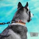 狗狗項圈狗圈脖圈大型犬頸圈防勒寵物用品【小檸檬3C】