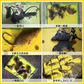 捕鼠器老鼠貼超強力黏鼠板家用捕鼠籠驅鼠滅鼠器夾藥神器抓大老鼠籠膠貼 陽光好物