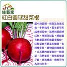 【綠藝家】C18.紅白圓球甜菜根種子10...
