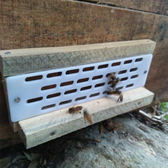 養蜂工具 蜂具蜜蜂蜂群蜂箱養蜂專用工具新品全套蜂王活體出售防逃片 创想数位DF