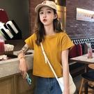 韓版純色磨毛短款網紅恤上衣女裝短袖打底衫港味潮