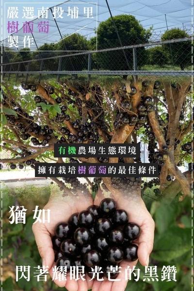 樹葡萄酵素果乾100g/包 嘉寶果 樹葡萄【全素】