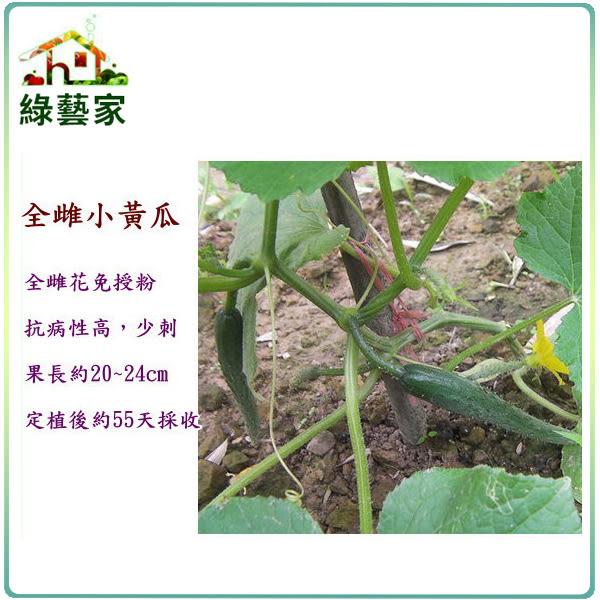 【綠藝家】G38.全雌小黃瓜種子2顆