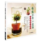 療癒水草小盆栽打造綠意小世界