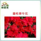【綠藝家】大包裝H44.蔓性牽牛花種子450顆
