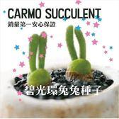 ⓒ多肉植物兔斯基碧光環 種子10顆【G52】